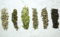 Leafy Green Tea Samples.jpg