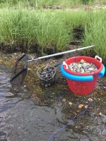 RI Shellfish Clams.jpg