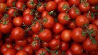 FB-tomato header.jpg