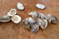 Bywater Oyster.jpg