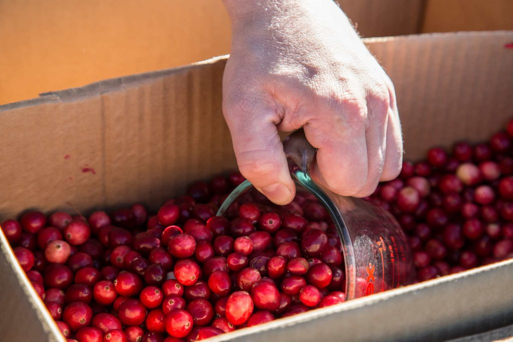 Fresh cranberries at Schoolyard Market